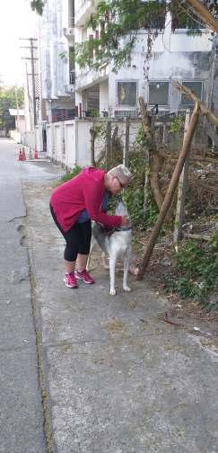 Morning walks with Kiba