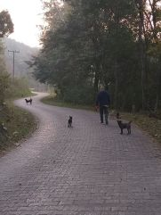 Morning walk with the gang